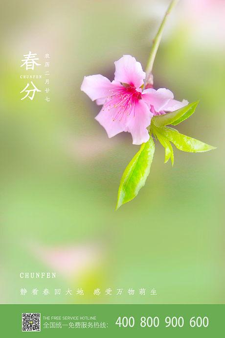 二十四节气春分海报-源文件